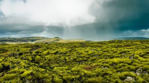Mossy lava fields, Iceland
