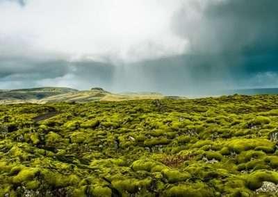 Mossy lava fields