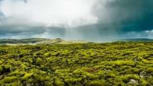 Lava fields, South coast, Iceland