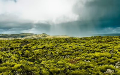 Have you ever dreamed of knowing more about the trolls and the elves and the hidden people of Iceland?